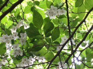 white flowers in tree