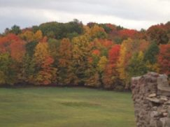 fall foliage of red, yellow, orange and green trees with a stone wall... a family seen during the fall in the Finger Lakes