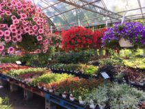 The greenhouse at Joseph's Wayside Market in Naples, NY with various colorful hanging baskets and flowering plants