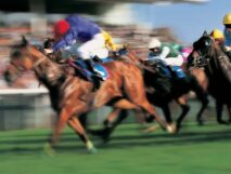 a high speed horse race as can be seen at the Finger Lakes Racing and Casino just minutes from the 1795 Acorn Inn B & B in Canandaigua NY